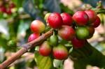 coffee_02-675x449