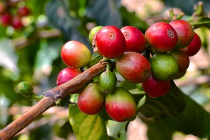 The Coffee Process inPics